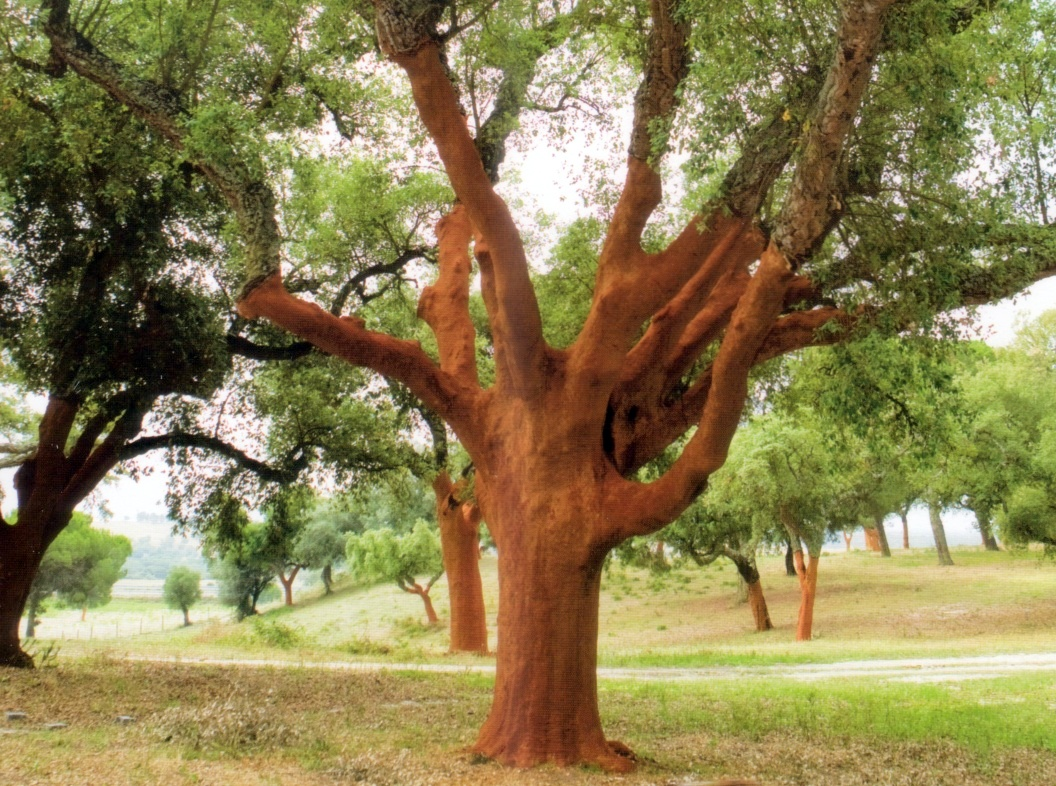 25 Different Types Of Trees And Their Uses Styles At Life